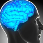 Investigations show how stress and health can affect brain matter